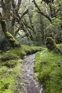 Moss Covered Forest Above Lake Mackenzie, Routeburn Track, Fiordland National Park by Stuart Black