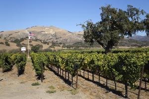 Zaca Mesa Winery and Vineyards by Stuart Black