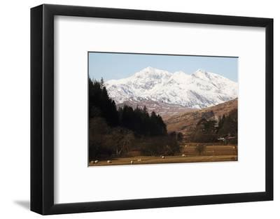 Mount Snowdon Capped with Snow as Welsh Sheep Graze on a Sunny Spring Day, Snowdonia National Park