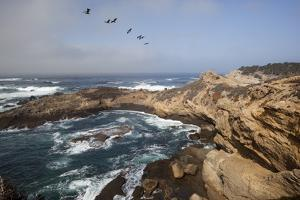 Point Lobos State Natural Reserve by Stuart