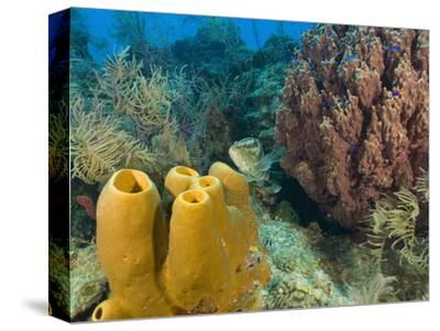 Couple Scuba Diving, Sponge Formations, Half Moon Caye, Barrier Reef, Belize