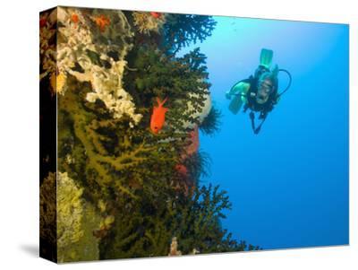 Scuba Diver Swimming into Cave of Tubastrae Coral Formation and Soldierfish, Banda Sea, Indonesia