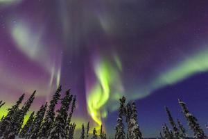 Aurora borealis, Northern Lights, near Fairbanks, Alaska by Stuart Westmorland