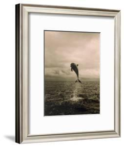 Bottlenose Dolphin Jumping Out of Water by Stuart Westmorland
