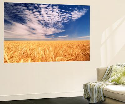 Clouds over Wheat Field Agriculture