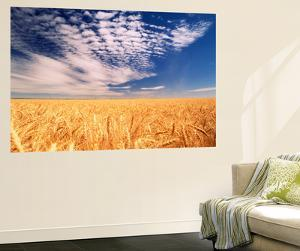 Clouds over Wheat Field Agriculture by Stuart Westmorland
