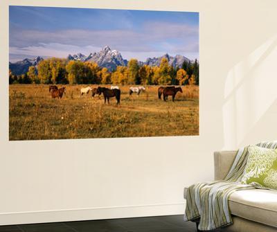 Horses on Moran Junction at Grand Teton National Park, Wyoming, USA