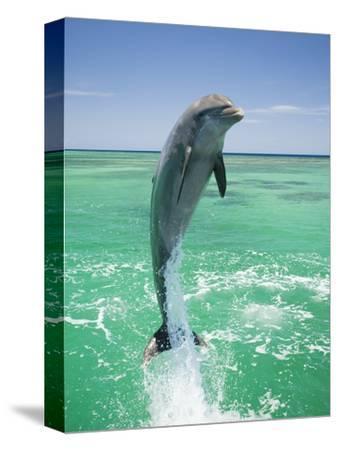 Jumping Bottlenose Dolphin