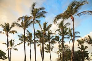 Kaloko-Honokohau Beach Park near Kona, Big Island, Hawaii, USA by Stuart Westmorland