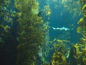 Monterey Bay Aquarium, Cannery Row, Monterey, Central California Coast, USA by Stuart Westmorland