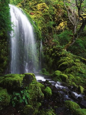 Mt Hood National Forest, Waterfall, Columbia Gorge Scenic Area, Oregon, USA