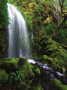 Mt Hood National Forest, Waterfall, Columbia Gorge Scenic Area, Oregon, USA by Stuart Westmorland