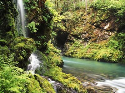 Old-Growth Rainforest, Graves Creek Tributary, Olympic National Park, Washington State, USA