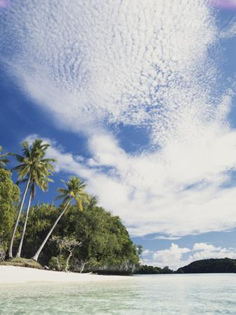 Palau, Honeymoon Island, Rock Islands, View of Beach with Palm Trees by Stuart Westmorland