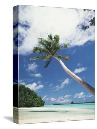 Palau, Palm Trees Along Tropical Beach