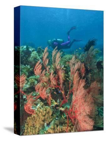 Scuba Diver and Sea Fans, Raja Ampat, Papua