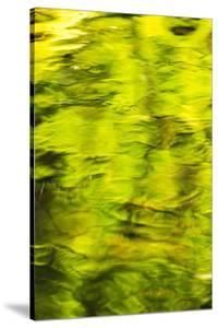 Summer Maple Leaf reflections, Goldstream River, Goldstream Provincial Park, near Victoria, B.C. by Stuart Westmorland