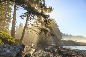 Sunshine streaming through trees, Juan De Fuca Trail, near Jordan River, Vancouver Island, British  by Stuart Westmorland