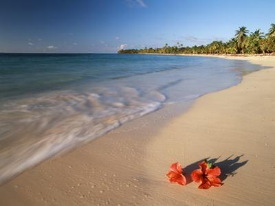 Tropical Paradise, Tabyana Beach, Roatan, Honduras