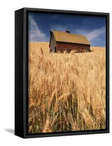 View of Barn Surrounded with Wheat Field, Palouse, Washington State, USA by Stuart Westmorland