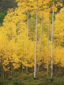 View of San Juan National Forest in Autumn, Colorado, USA by Stuart Westmorland