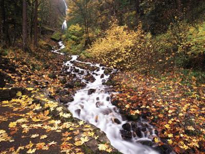 View of Wahkeena Falls at Columbia Gorge National Scenic Area, Oregon, USA