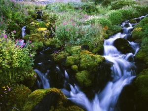 View of Waterfall in Forest, Oregon, USA by Stuart Westmorland