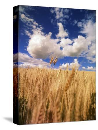 View of Wheat Field, Palouse, Washington State, USA