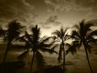 View Palm Trees on Beach, Big Islands, Kona, Hawaii, USA