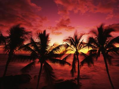 View Palm Trees on Beach, Big Islands, Kona, Hawaii, USA by Stuart Westmorland