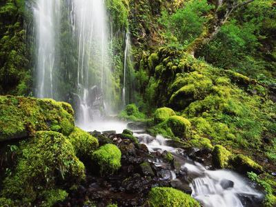 Waterfall, Mt Hood National Forest, Columbia Gorge Scenic Area, Oregon, USA