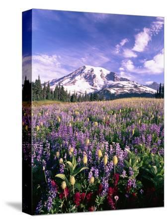 Wildflowers in Mt. Rainier National Park