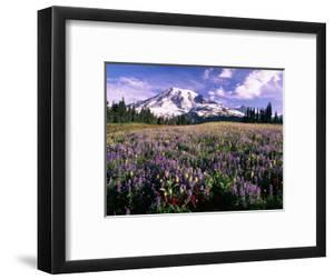 Wildflowers in Mt. Rainier National Park by Stuart Westmorland