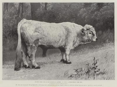 Studies from Life at the Zoological Gardens, a Chillingham Park Bull--Giclee Print