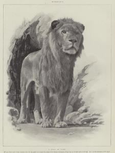 Studies from Life at the Zoological Gardens