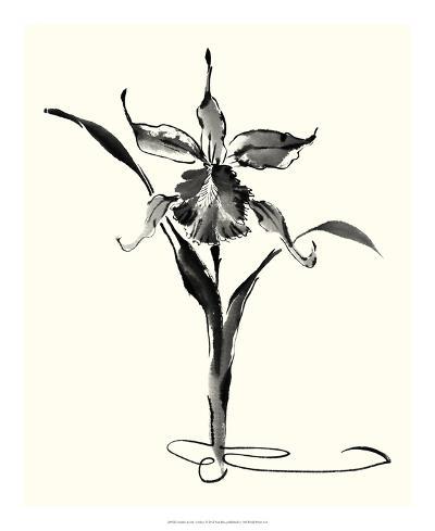 Studies in Ink - Cattleya-Nan Rae-Giclee Print