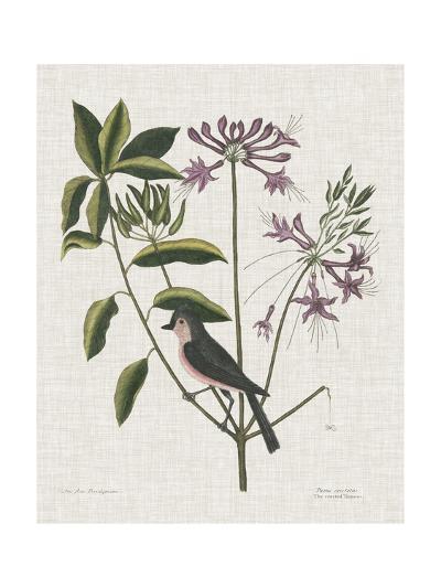 Studies in Nature I-Mark Catesby-Art Print