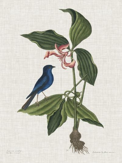 Studies in Nature III-Mark Catesby-Art Print
