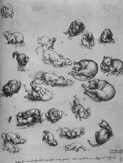 'Studies of Cats and of a Dragon', c1480 (1945)-Leonardo da Vinci-Premium Giclee Print