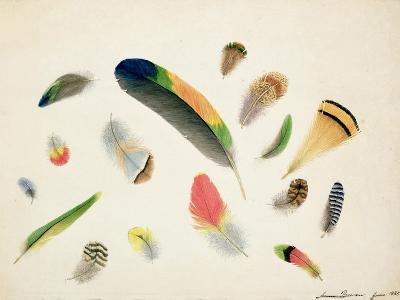 Studies of Feathers, 1855-Anne Bowen-Giclee Print