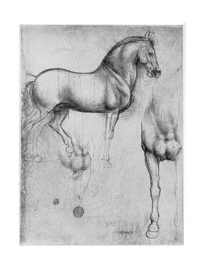 Studies of Horses, C1490-Leonardo da Vinci-Premium Giclee Print