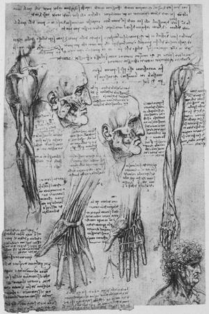 'Studies of the Muscles of the Face and Arm', c1480 (1945) Giclee Print by  Leonardo Da Vinci   Art com