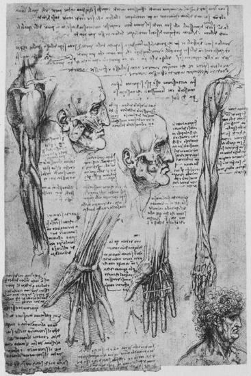 'Studies of the Muscles of the Face and Arm', c1480 (1945)-Leonardo da Vinci-Giclee Print