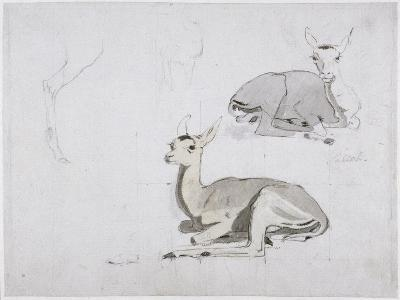 Studies of Young Pallah Deer Resting, C.1802 (W/C and Graphite on Paper)-Samuel Daniell-Giclee Print