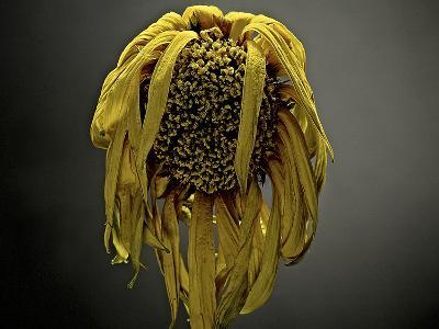 Studio Flowers VII-James McLoughlin-Photographic Print