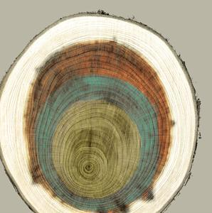 Colored Rings II by Studio W