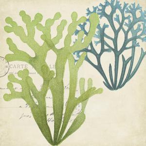Seaweed Overlay II by Studio W