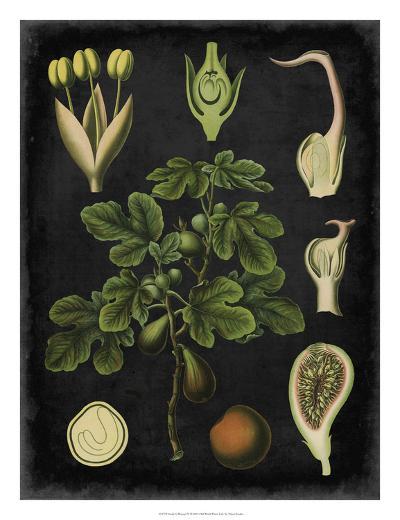 Study in Botany IV-Vision Studio-Giclee Print