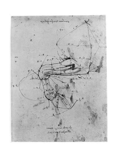 Study in Proportion of a Horse's Leg, Late 15th or Early 16th Century-Leonardo da Vinci-Giclee Print