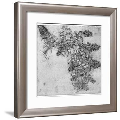 Study of a Blackberry Branch, Late 15th or Early 16th Century-Leonardo da Vinci-Framed Giclee Print